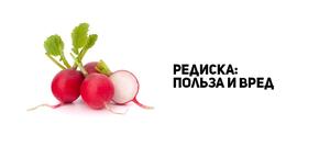 Редиска - состав овоща: витамины и микроэлементы