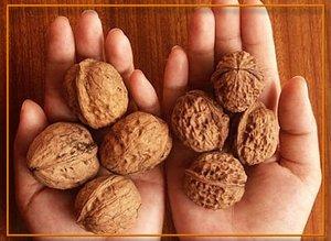 Грецкие орехи в руках фото