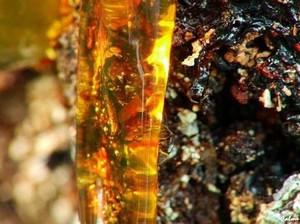 Какие заболевания лечит живица кедровая