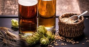 Энергетическая ценность пива, калорийность и польза напитка, его влияние на мужской и женский организм