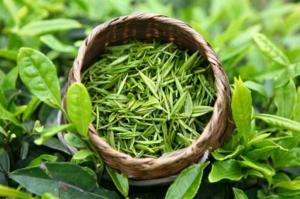 Зеленый чай - природный антиоксидант, способен принести пользу всему организму
