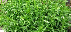 Полезные свойства травы травы